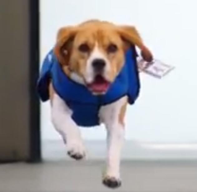 Klm Dog