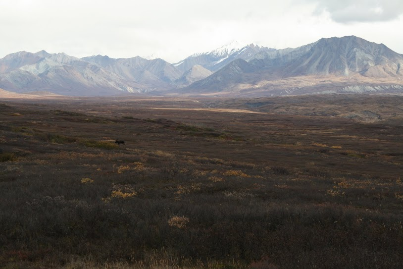 Denali is vast.
