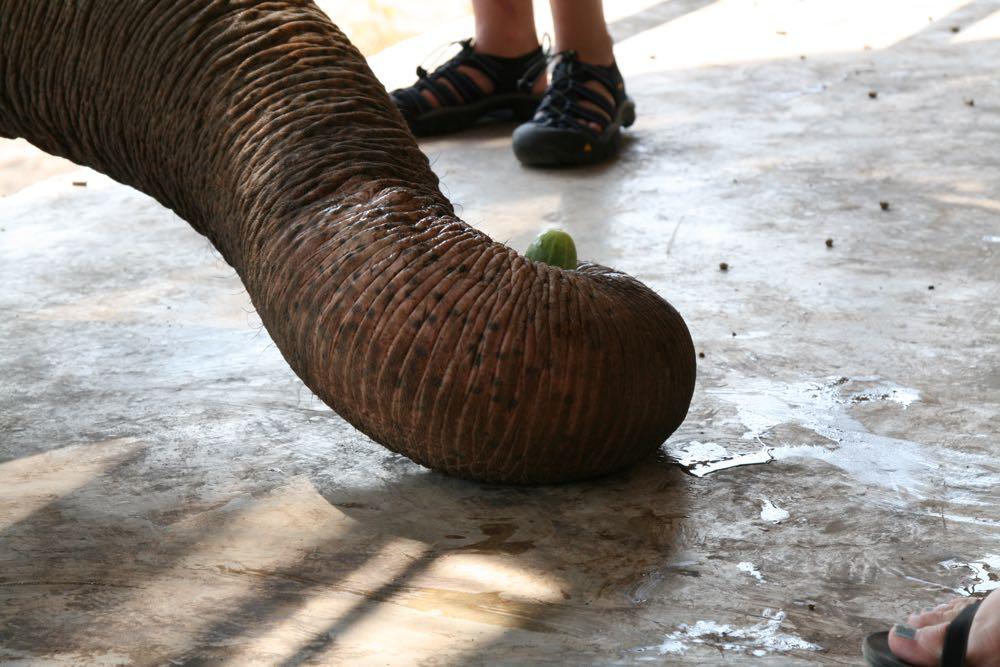 Elephants-World-05
