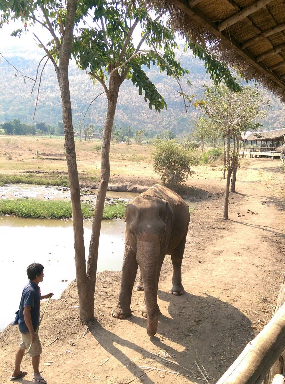 Elephants-World-08