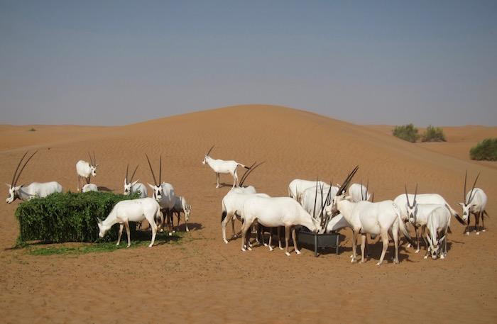 Al-Maha-Activities - 16