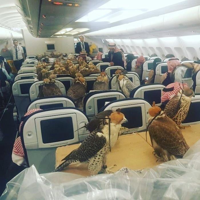 Saudi-Prince-Hawks