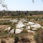 Singita Boulders Lodge Sabi Sands – 7